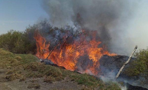 Bomberos apagaron un incendio gracias a su ingenio - Diario Huarpe